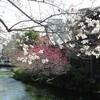 木蓮と花桃と桜