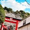 横浜元町の厳島神社の桜2019