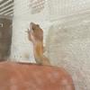 とりあえずレオパを1週間飼ってみたレポート@脱走にはまいった!