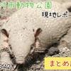 【レポ#25.5】羽村市動物公園(2021/6/12)の見どころまとめ