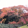 ストレッチは逆効果?と紅葉と巨木