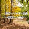 【一度行ってみたい絶景】〜篠栗九大の森〜