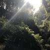 伊尾木洞の散策 (2): 30 分で楽しめる神秘的なプチ冒険
