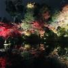 高台寺*秋の夜間特別拝観