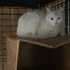 白猫ちゃんのお引っ越し♪