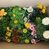 花の苗が届く