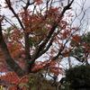 【鎌倉いいね】12月の鎌倉さんぽの予定を考える。