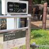 上野動物園のアジアゾウ