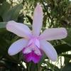 「まつこの庭」の春のラン(2)