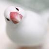 【フツウのコト1】自己紹介