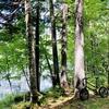 ミニベロで行く、北海道チミケップ湖のサイクリング