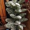 《アーティスB1階》 クリスマスおすすめ資材
