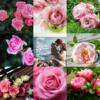 アメブロ、Instagram、Facebookに作家「月下美人」さんの詩をご紹介しました。
