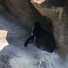 東山動物園の人気動物ベスト10をご紹介!1位はあの動物!?【名古屋・東山公園】