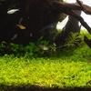 アクアリウム水草紹介!綺麗でかっこいい水槽を簡単に作るためにおすすめの水草!