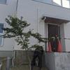 芸術的な樹形 三重県桑名市 植栽工事