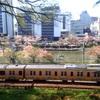 お出かけ日記@飯田橋・神楽坂へ散り際の桜のお花見に