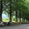2016/7/14 関西ツーリング最終日 その① メタセコイアの並木道へ(°∀°)
