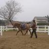 馬の歩き方 側対歩と斜対歩