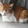 猫の体の模様を英語で何という?