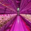 米国と中国が植物工場などの農業ビジネスにて連携。中国や世界市場を視野にビジネス展開へ