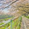 春は満ちて『愛知・香流川緑道』