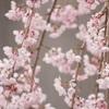 花の色はうつりにけりな。。。ブログに日記を書くのは承認欲求があるせいかと思いきや、まったく違う理由だった。