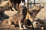 旭山動物園で動物たちの可愛らしさと、もの恐ろしさを堪能する。