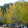 秩父ミューズパークの銀杏と小鹿野のダリア園 に行ってきました~~(*^^*)