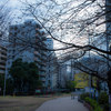 ~一週間ほど前の恵比寿タコ公園~ お花見にも適している場所だ。