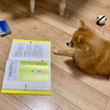 【本を読む犬】〜13歳のハローワーク〜