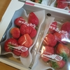 【ふるさと納税】福岡県宗像市から博多あまおうが届きました。