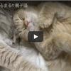 とっても仲良し 一緒に寝る二匹のネコちゃんに癒される