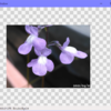 C#、WPF、バイキュービック補完法での画像の拡大縮小変換、24bit(普通のカラー)と32bit(半透明画像)対応版