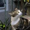 私が日本にやって来た理由 ~野良猫のアイデンティティ(前編)~