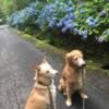 犬と猫の向こう側 放送のお知らせ