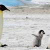 【雑像】「ペンギン」とは何者か?