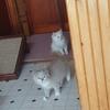 昔話し 子猫編6:ゆず君こまちゃんやってきたの巻