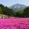 【秩父】羊山公園 武甲山と芝桜、ポテくまくんに会いに行こう