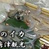 福岡空港から:呼子のイカを食べに行こう