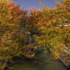 桜の木の葉の色付きと十石舟@2020