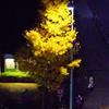 西新宿の紅葉。