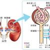 慢性腎臓病(CKD )のリハビリテーション