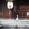 東寺 京都研修 2日間の旅