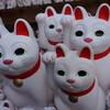 猫に招かれ豪徳寺 招き猫まみれ。。。