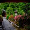 京都・黒谷 - サツキ咲く くろ谷 栄摂院