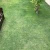 芝生が順調に成長✨