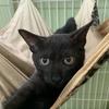 きれいな黒猫 5か月子猫3ニャン【10/25(日)里親様募集】