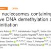 DNAの傷が転写を活性化する?