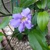 トロピカルなお花